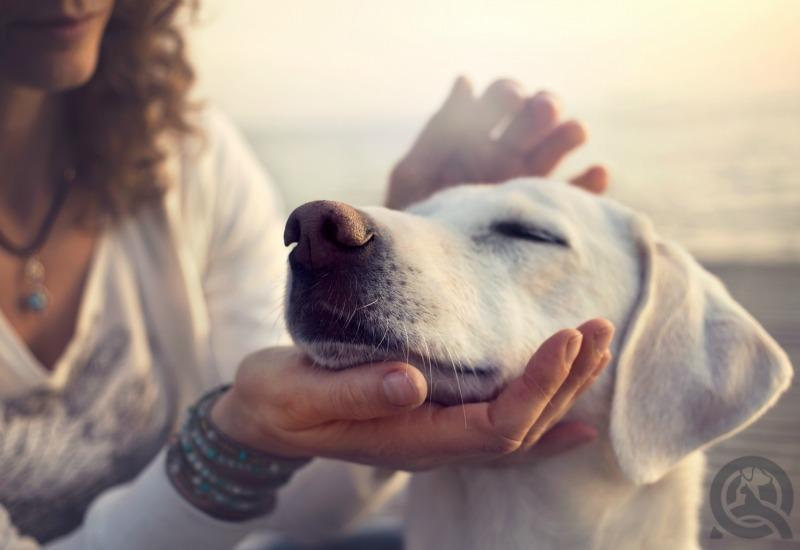 happy calm dog