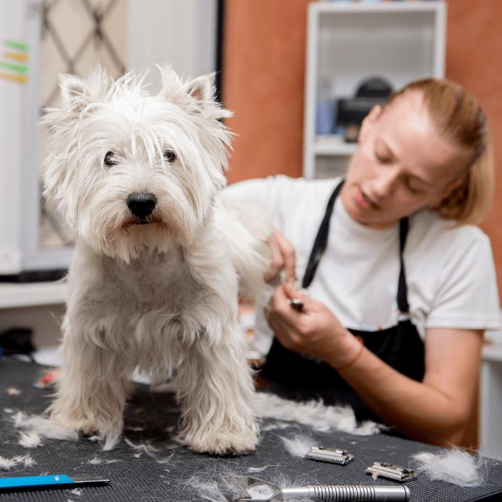 dog groomer salary at pet salon