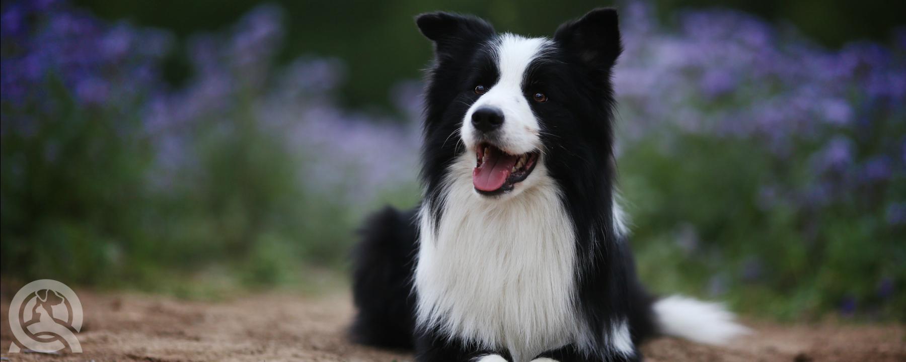 Dog Grooming vs. Animal Grooming Course