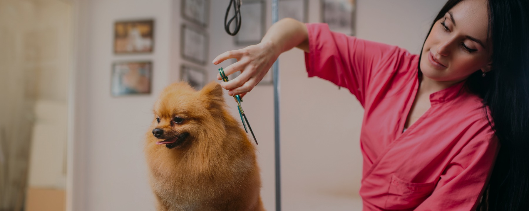 dog-groomer-job-decription - QC Pet Studies