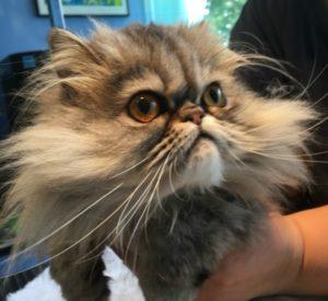 Nicki Hughes Cat grooming