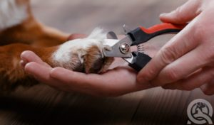 clipping dog toe nails