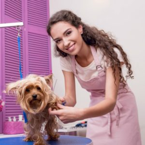 investing dog groomer salary