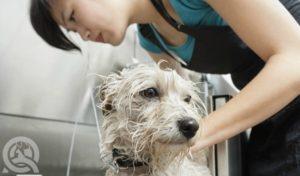 dog grooming employee