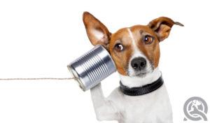 Communication dog
