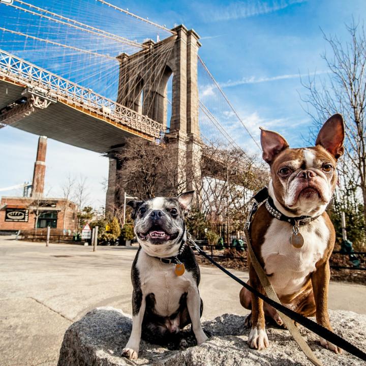 best cities to start your dog grooming practice