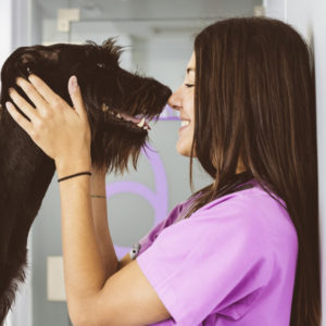 transferable skills from dog grooming course