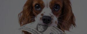 how much do dog groomers make - salary