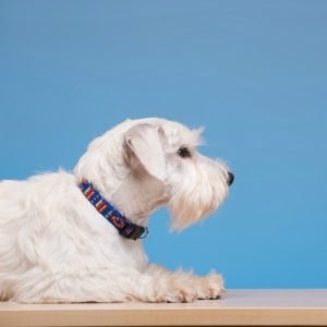 raising dog grooming prices