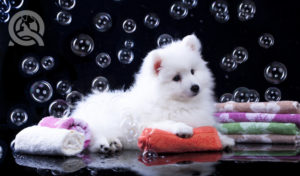 What's in a Competitive Dog Groomer's Kit?