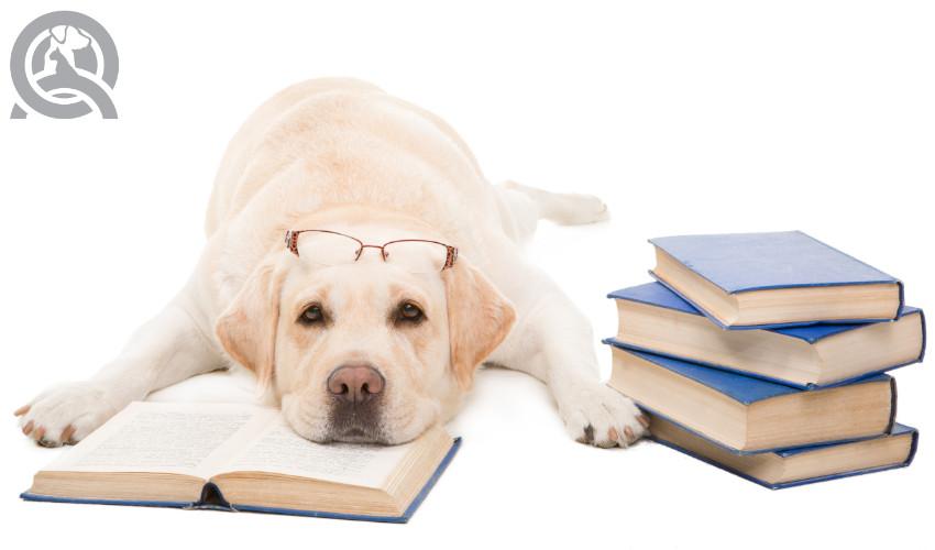 Dog Grooming Classes Back To School Qc Pet Studies