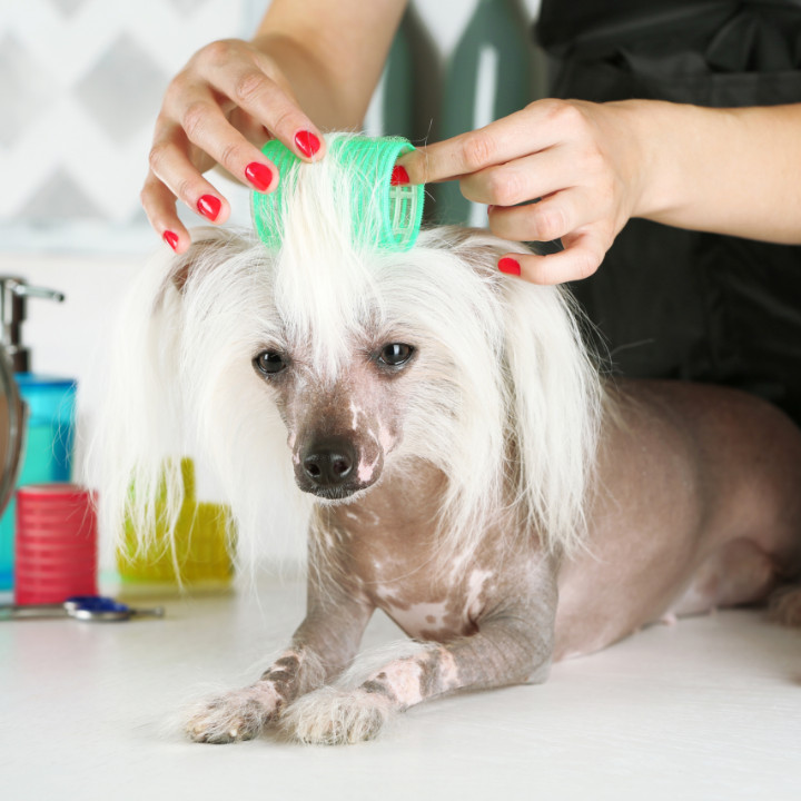 Sniffin Around Blog Qc Pet Studies