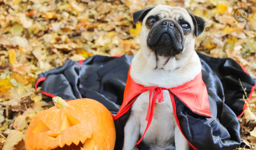 dog in dracula costume