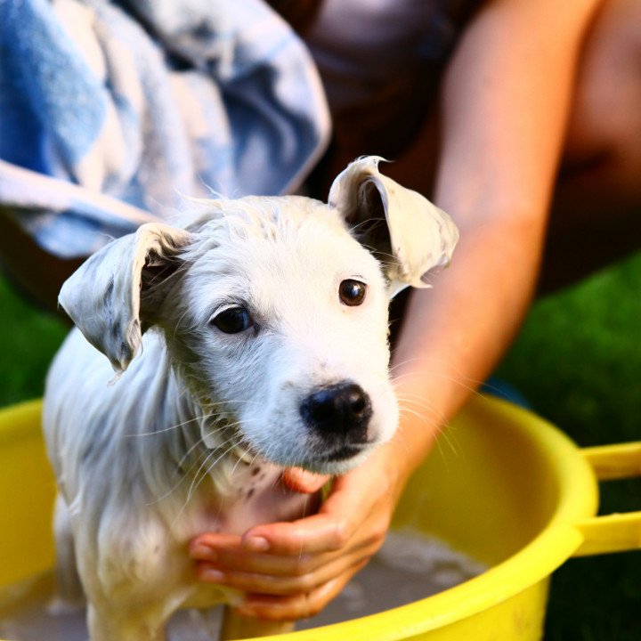 mobile dog grooming business washing dog outside