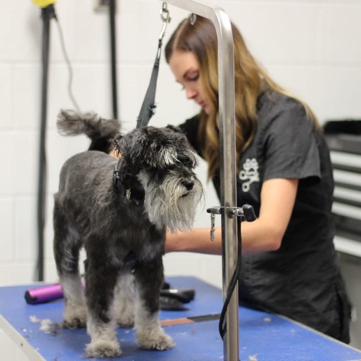 Dog grooming school graduate Casey Bechard at work