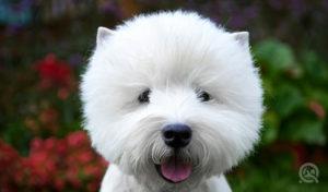 teddy bear cut done by a professional dog groomer