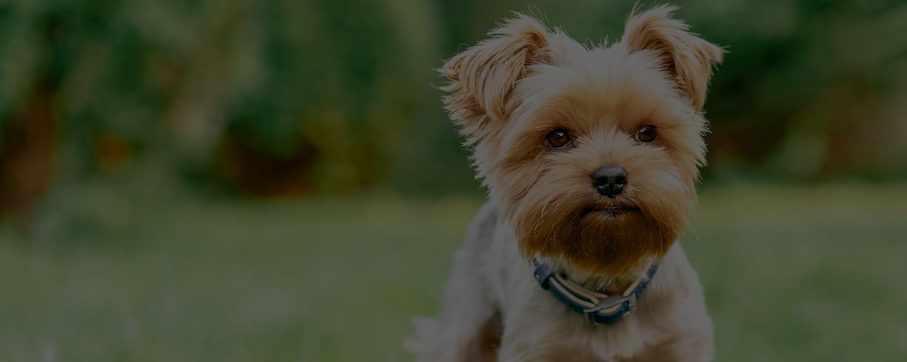 My Favorite Dog Haircuts