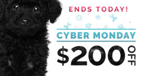 qc pet studies cyber monday promotion last chance $200 off tuition