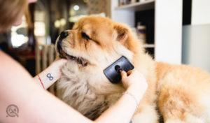 grooming a dog senior or elderly dog