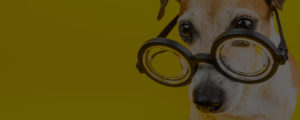 dog grooming academy