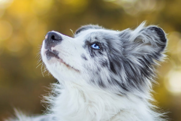 dog portfolio for dog grooming jobs