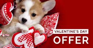 Valentines offer qc pet studies
