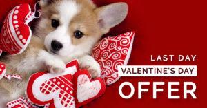 qc pet studies valentines day promo