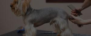 dog grooming jobs