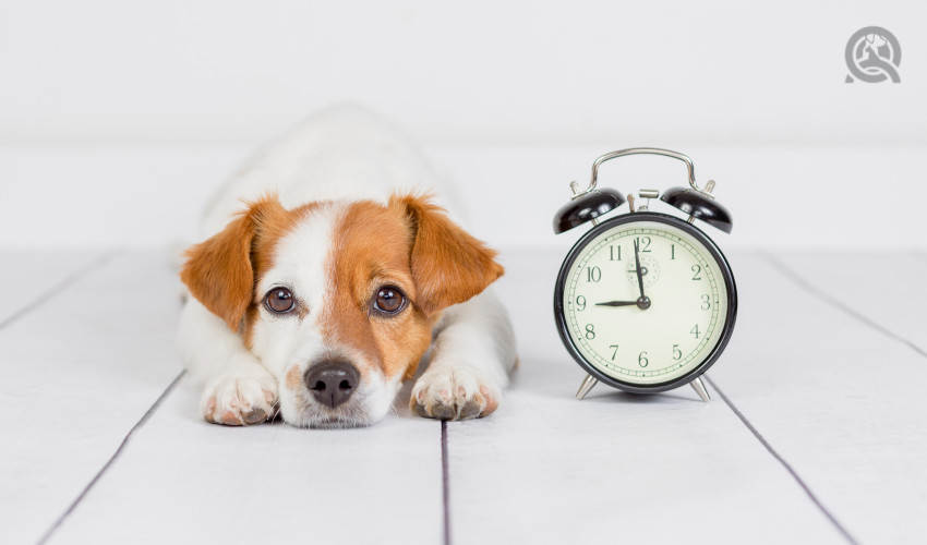 keeping track of time during dog grooming appointment