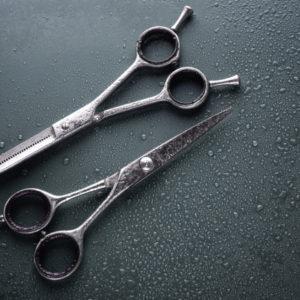 dog grooming scissors wet can start to rust