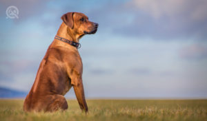 proud standing dog