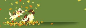 QC Pet Studies Online Grooming School - November 2019 Offer Header Background Image