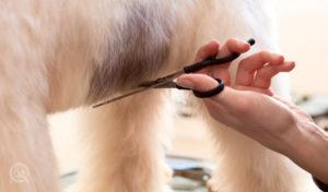 dog groomer scissor hair