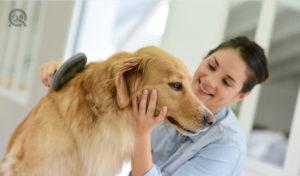 dog grooming running a dog groomer business