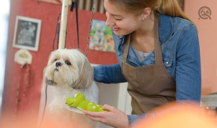 happy dog groomer