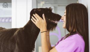 dog groomer business