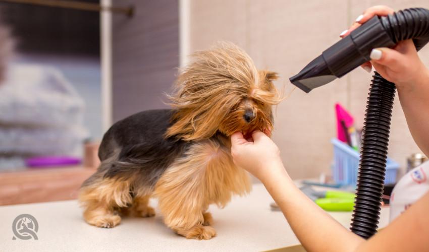 High velocity dog grooming dryer