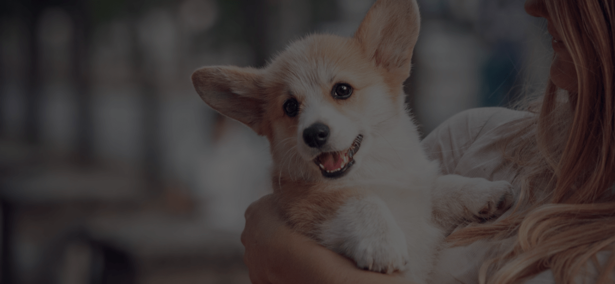 QC Pet Studies' Top 10 Dog Grooming Articles of 2019
