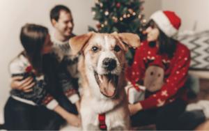 adorable dog photobombing family christmas photo