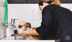 female groomer bathing dog