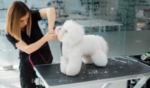 female groomer giving dog teddy bear cut