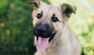 cute up-close shot of puppy
