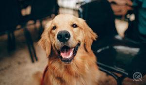 QC Pet Studies Dog Grooming Realities