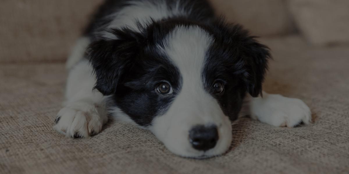 5 Ways Pet Grooming School Teaches You to Understand Dog Behavior