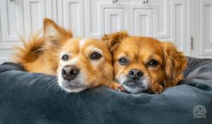 two dogs cuddling on cushion