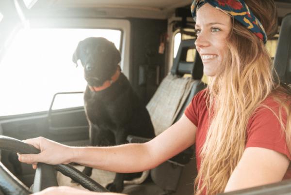 woman's dog grooming career - driving in van with black lab in passenger seat