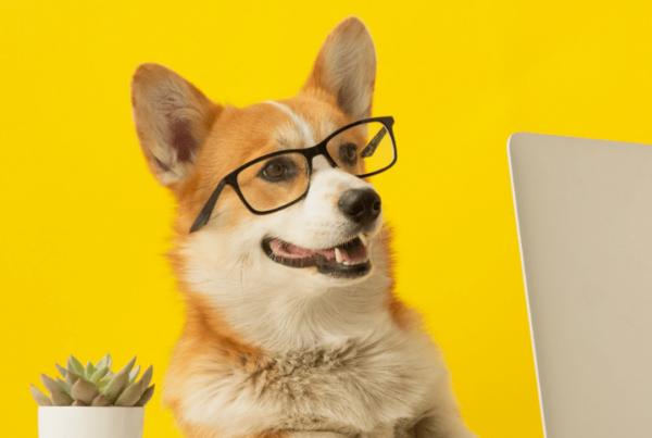 QC Pet Studies corgi wearing glasses, sitting at table and looking at laptop