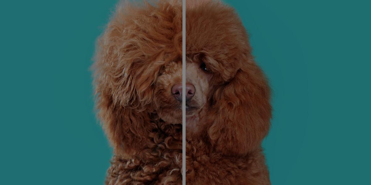 Is Dog Grooming Hard?