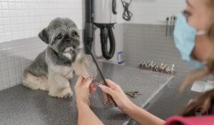 Shih Tzu being brushed in dog grooming salon