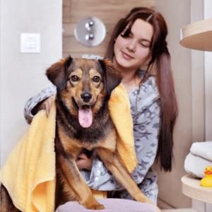 dog groomer salary feature image